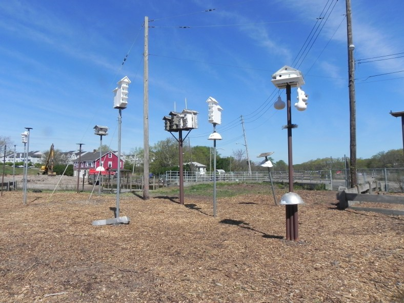 Purple Martin Sanctuary