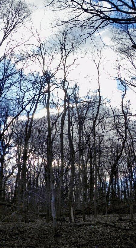 trees1_1_2013