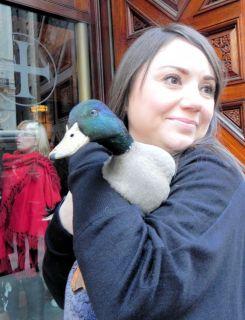 Girl with pet Mallard.
