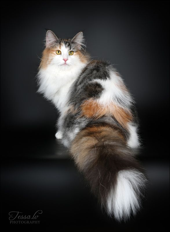 Beautiful cat. Don't know who photography was.