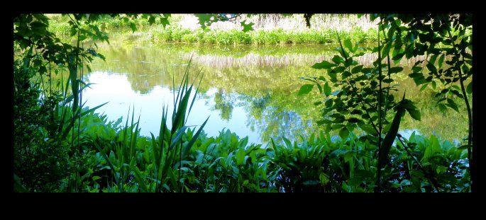 Butterfly Pond at Blue Heron Park in spring.