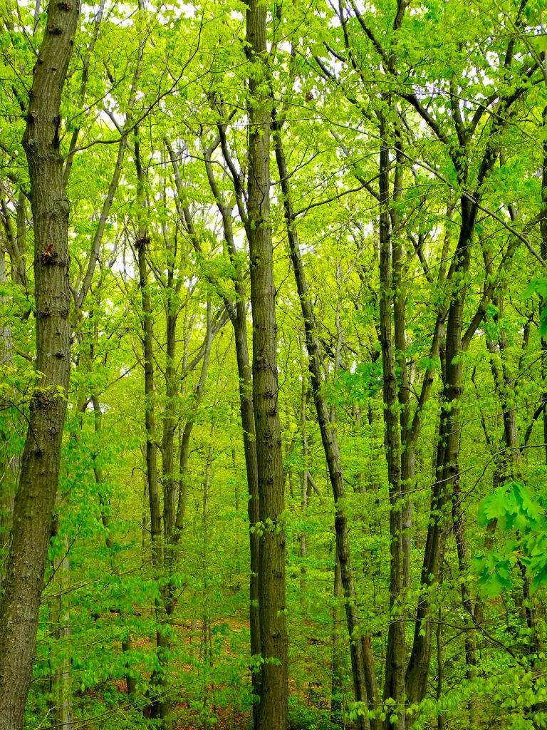Spring at High Rock Park