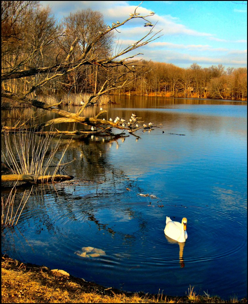 Autumn at Wolf's Pond